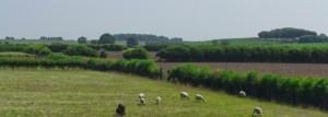 Radcliffe Greenbelt Sunny Day
